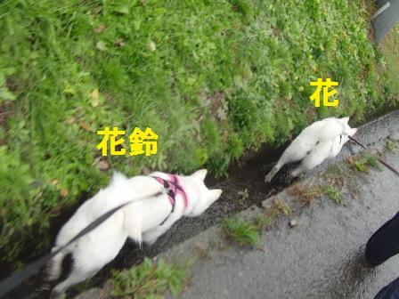 11.19童話館でお散歩7
