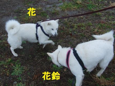 11.19童話館でお散歩・ガウガウ母娘 (2)