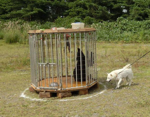 2014.9.7 花鈴の獣猟競技