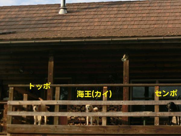 2014.9.8 シェルパさん家のワンズ