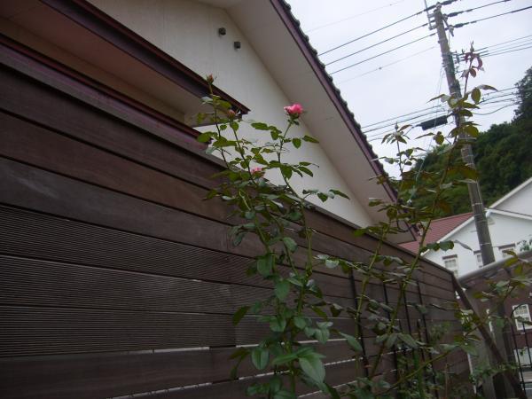 P1000955_convert_20111003191100.jpg