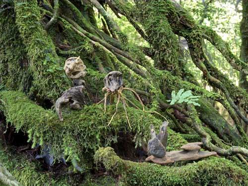 この森には昔、ほんとうに居たんだよ!