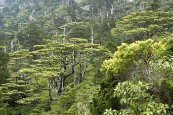 この森の一部がいつか朽ちて海に流木として現れる。