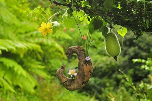 流木の花器に屋久島山茶花とヨメナ<BR>バックのトウガンの実と花も見ごろ!