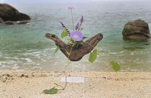 野朝顔、らっきょの花、他