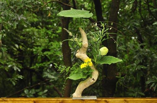 クワズ芋の葉、風船トウワタ、ドラセナの花、他