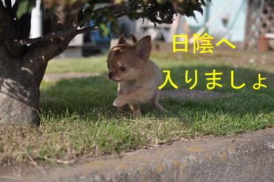 1002-jinbei-7.jpg