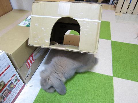 箱の下敷き