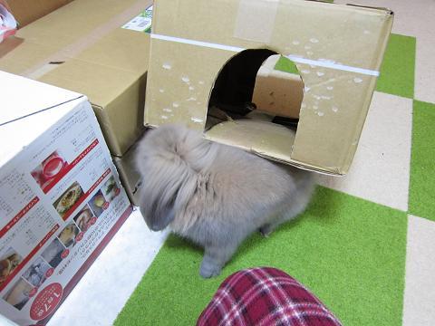 箱の下敷き2