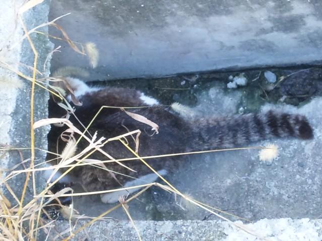 滝の茶屋野良猫2