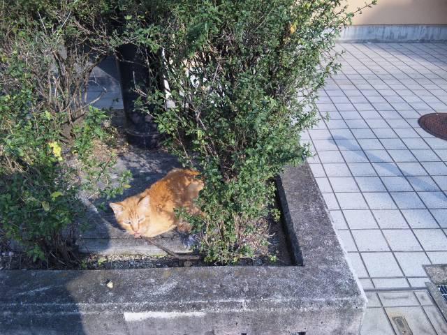 自然繁殖子猫1