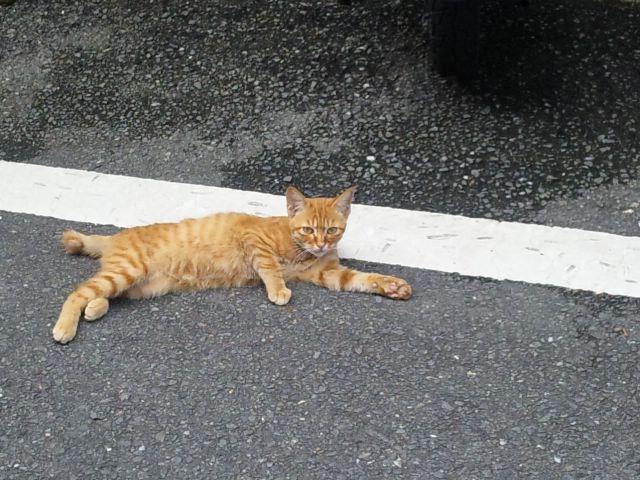 自然繁殖子猫2