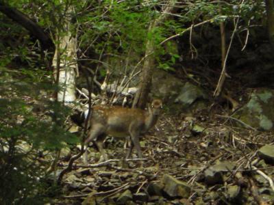 写真No.3 野生の鹿