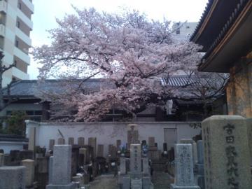 SN3O0009桜