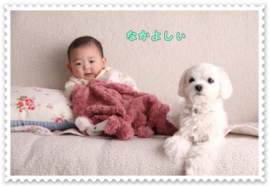 IMG_3951_convert_20120409141422.jpg