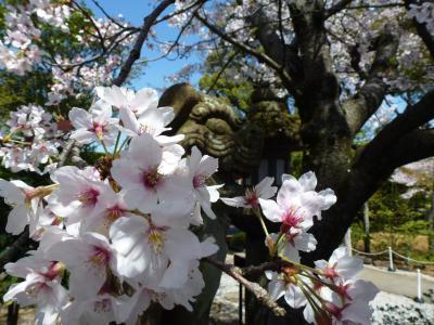 渕神社桜③ 2013 3・29