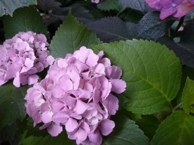 黄葉でピンク花2013 6・8