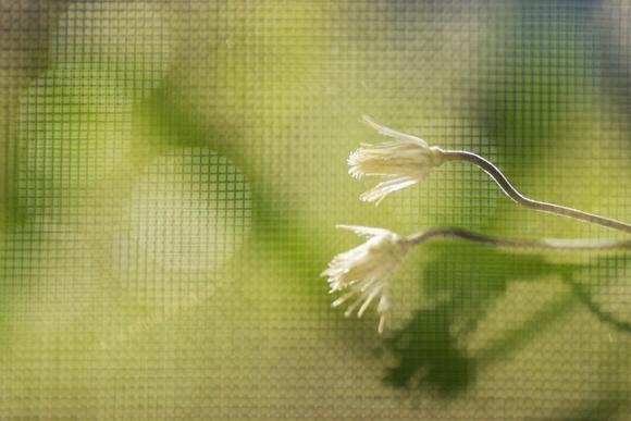 窓の話 - モスアゲート