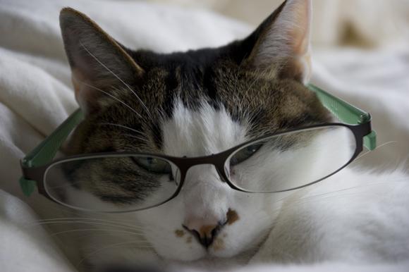 緑の眼鏡2