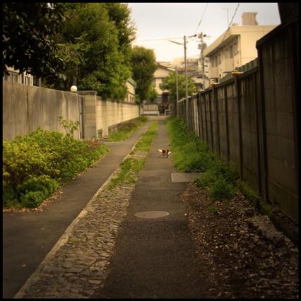 猫の散歩道