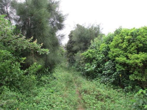 上地島ジャングル