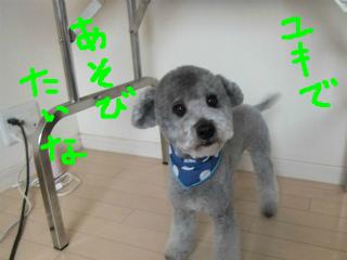 snap_emudog_20142523026.jpg