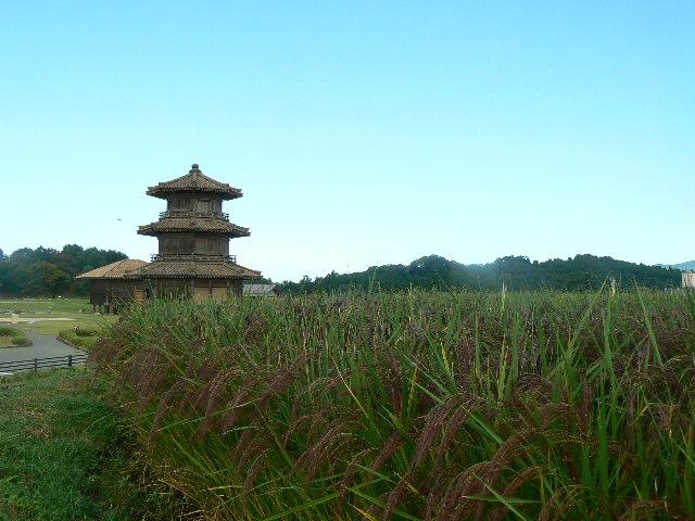 古代赤米にうつる八角形鼓楼