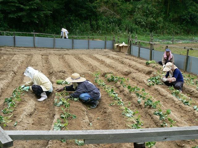 500本の苗を植えています