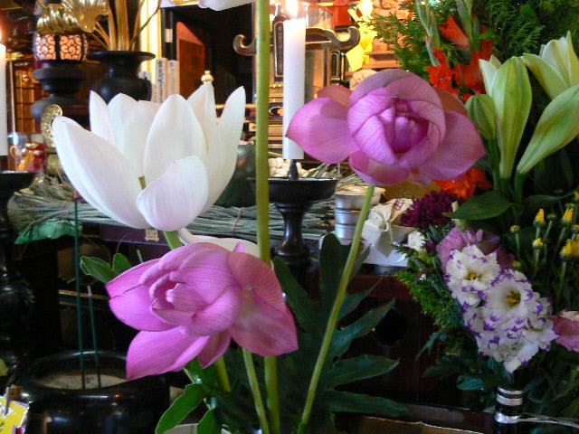 宝前の蓮の華