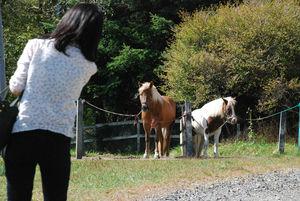 牧場の馬も一休み41