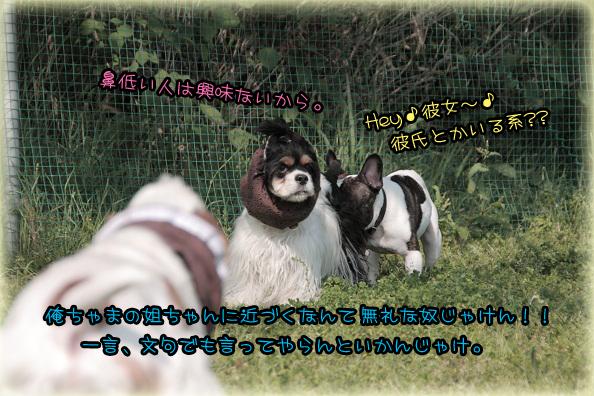IMG_2274のコピー