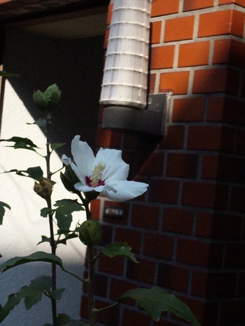 Flowers_20111009