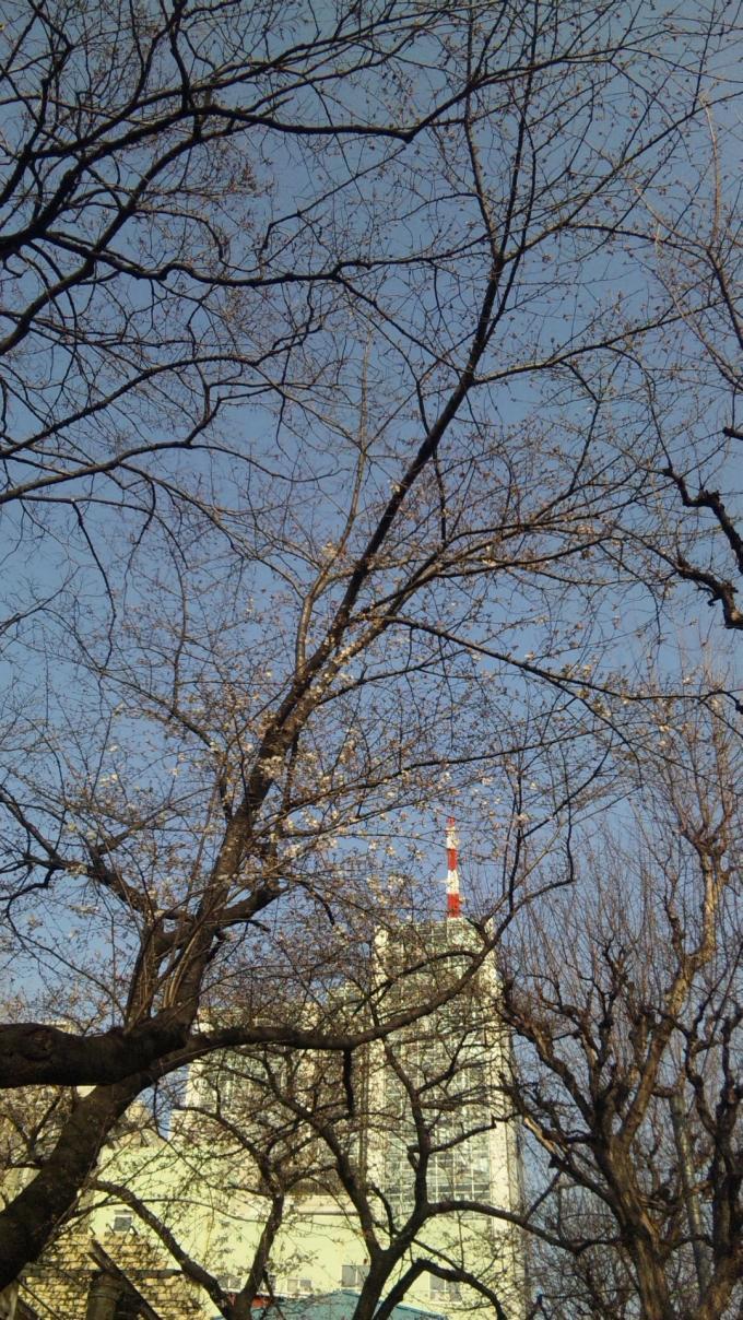 SAKURA_20130319
