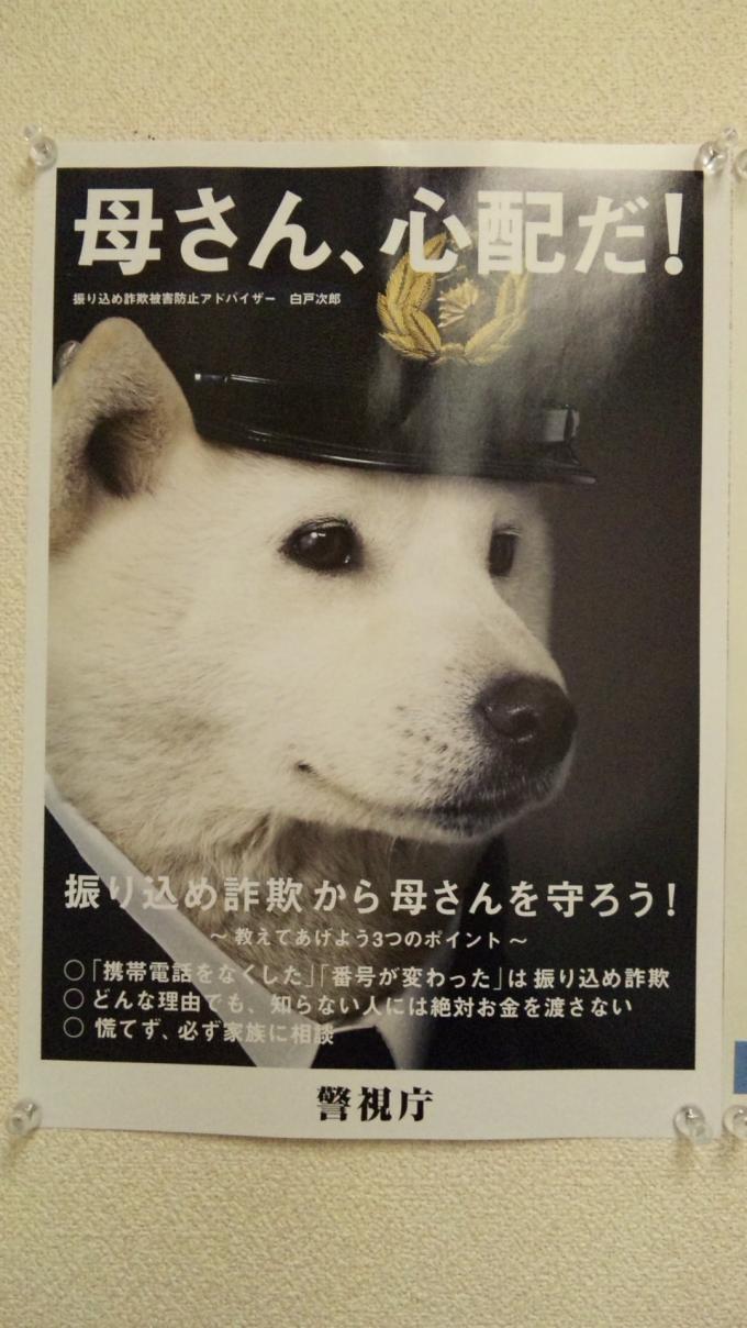 DOG_20130321