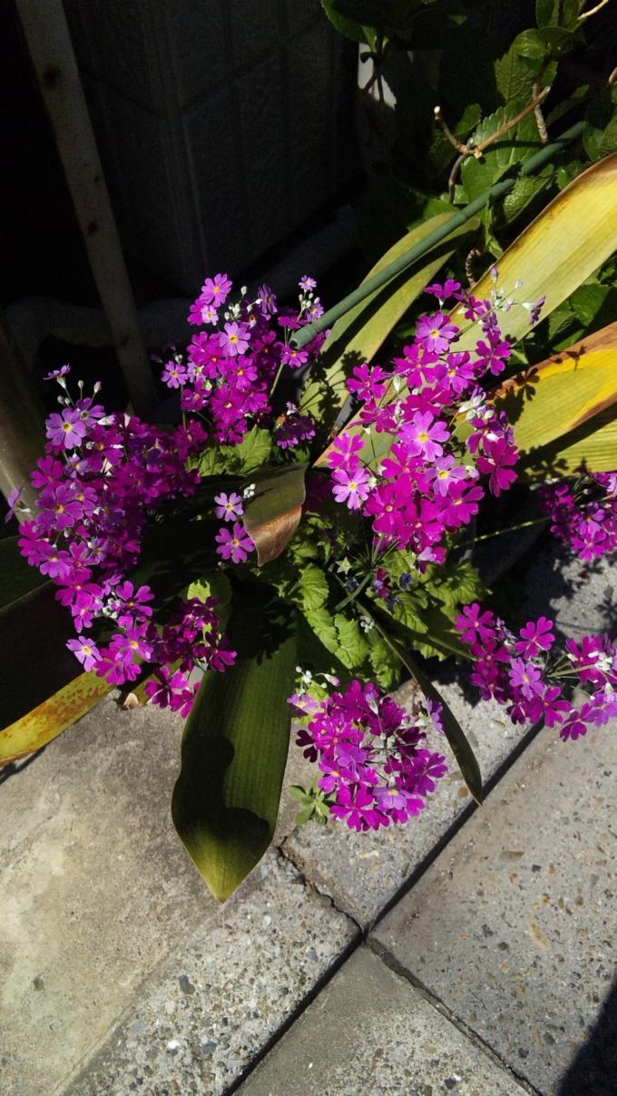 FLOWER_20130321