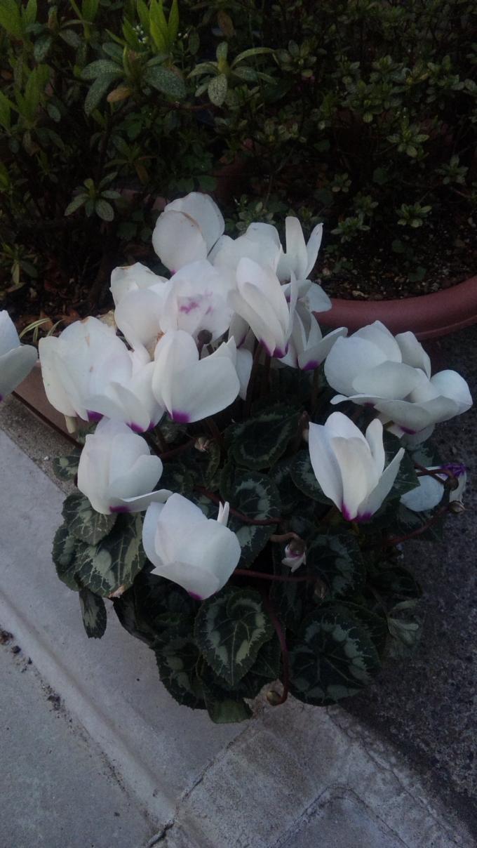 FLOWER_20130323