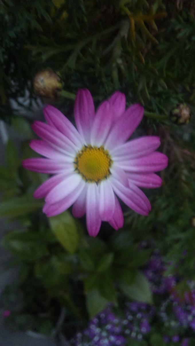FLOWER_20130330