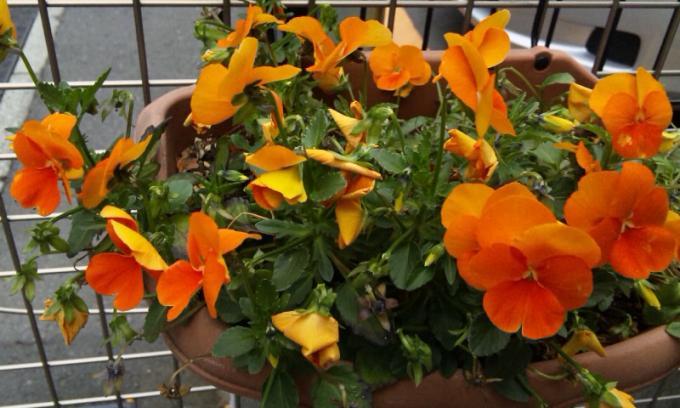 FLOWER_20130405