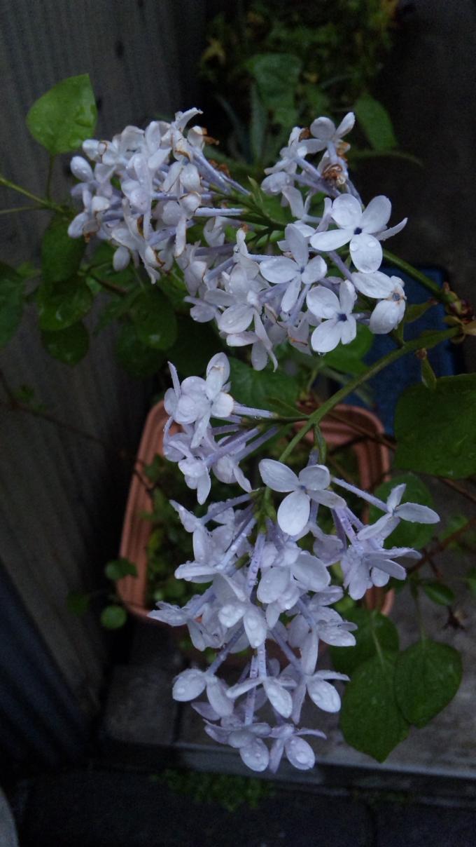FLOWER_20130406