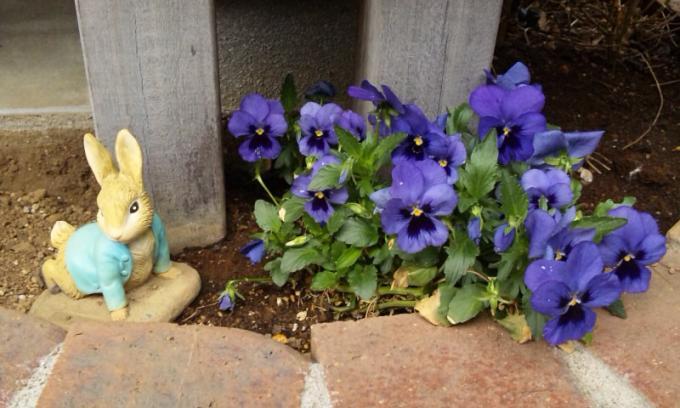 FLOWER_20130411