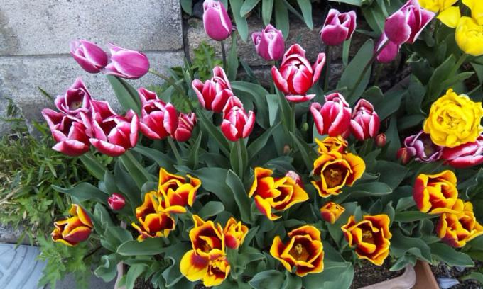 FLOWER_20130412