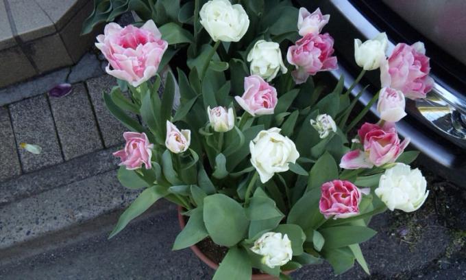 FLOWER_20130413