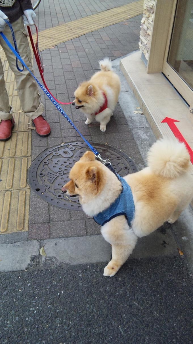 DOGS_20130417
