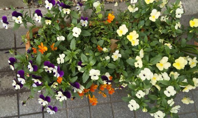 FLOWER_20130417