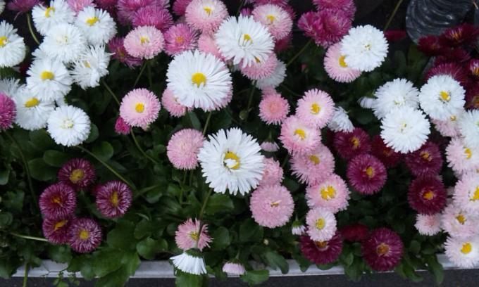 FLOWER_20130421