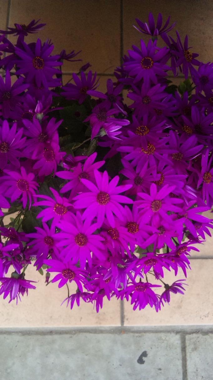 FLOWER_20130423