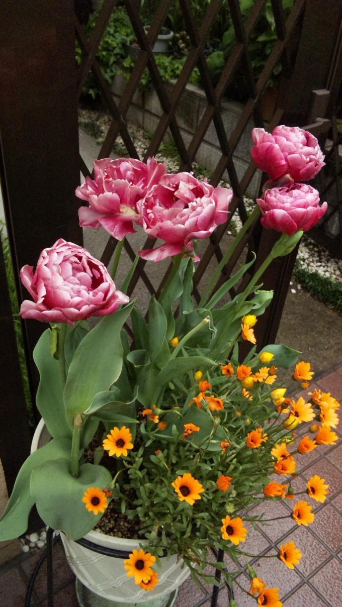FLOWER_20130424
