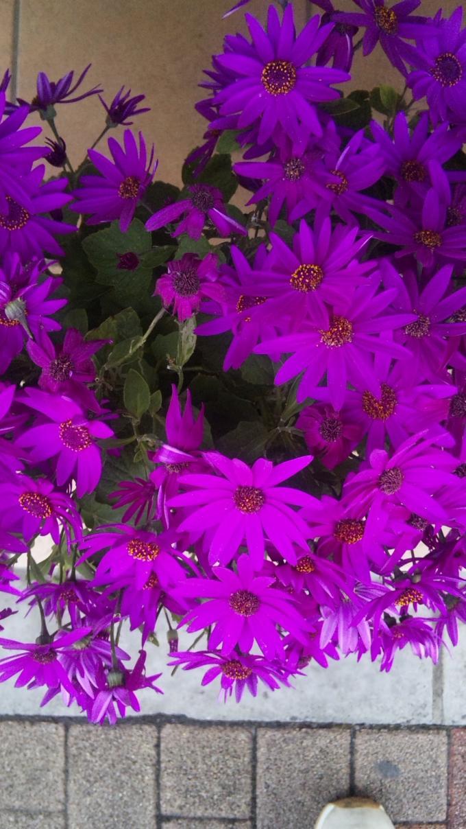 FLOWER_20130425