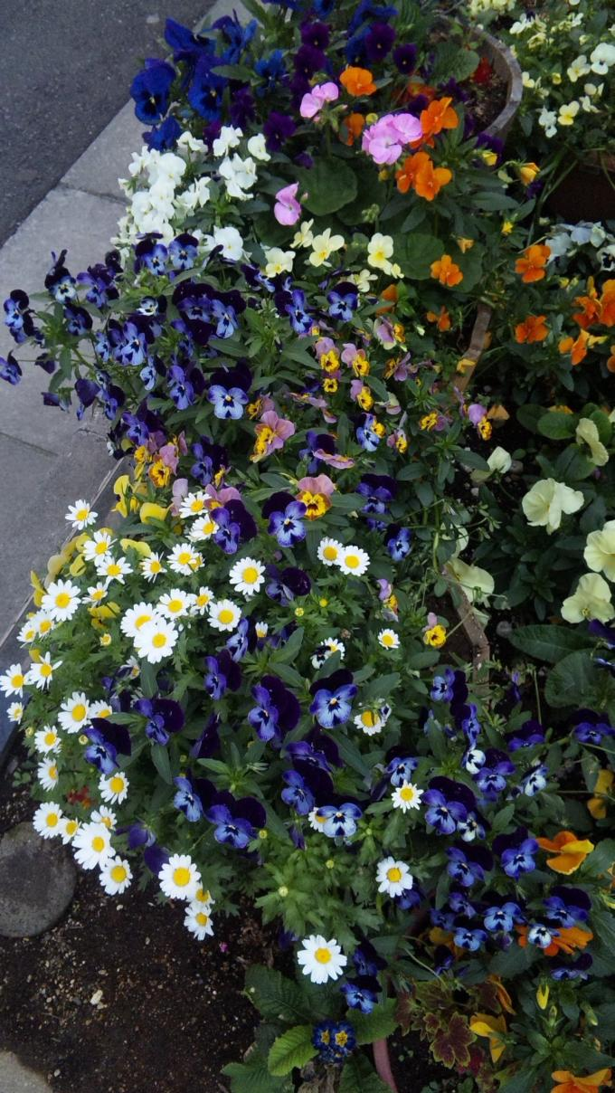 FLOWER_20130426
