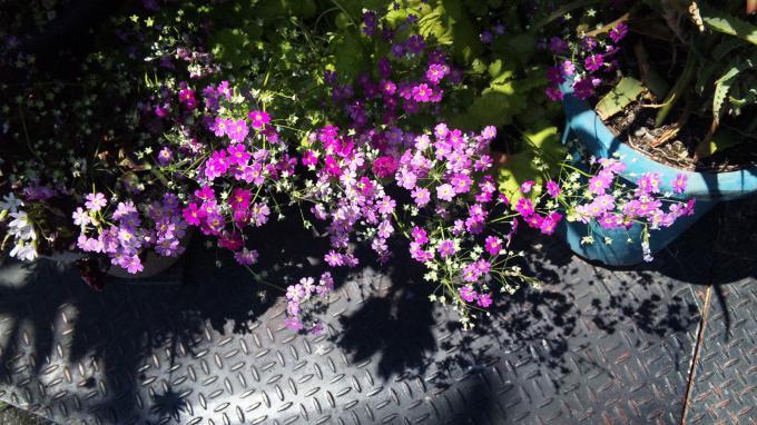 FLOWER_20130427